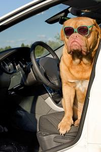 hitting the road with your pet